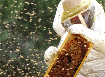 צביקה אופיר- דבוראי מאלון הגליל, דור שלישי למשפחת דבוראים צילום אדוה אופיר