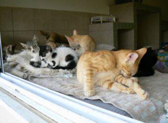 חתולי רחוב חסרי בית שנאספו לקבל טיפול אוהב ומסור בשירות הווטרינרי העירוני