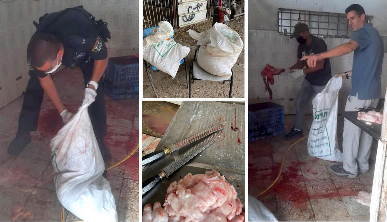 גורמי השירות הווטרינרי בלוד ויחידת הפיצוח של משרד החקלאות בעת תפיסת הבשר